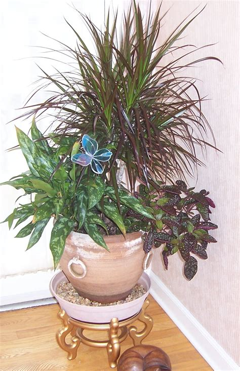 in door plant video indoor plant www imgkid com the image kid has it