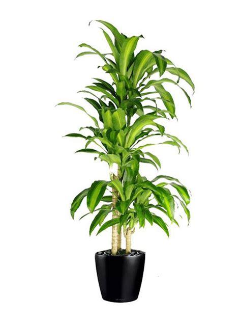 floor plant floor plant 01 happy plant inscape indoor plant hire