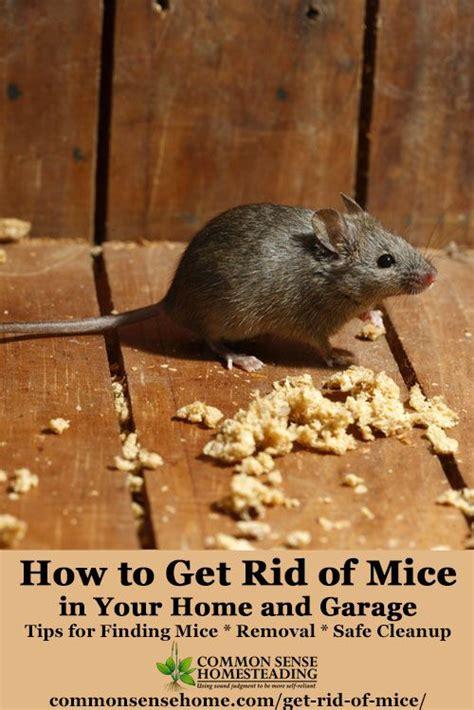 best 20 getting rid of rats ideas on pinterest rat