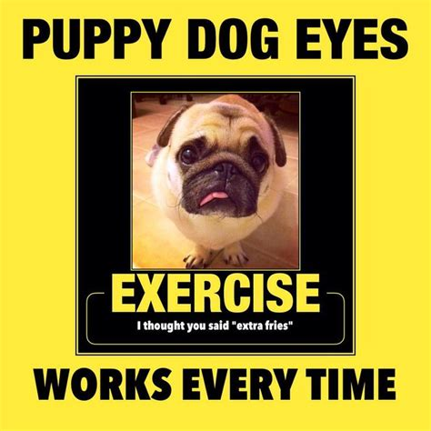 pug exercise 1000 ideas about pug meme on pug puppies pugs and pugs