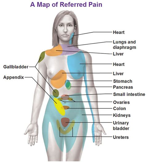 pain body visceral sensory neurons and referred pain