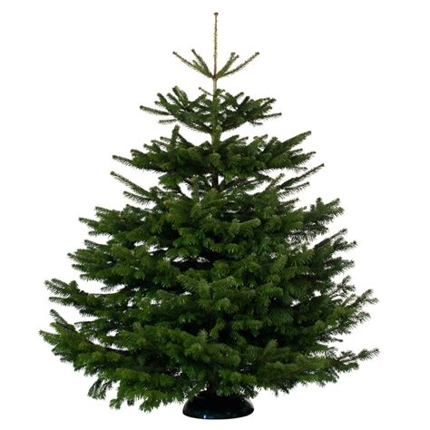 stores selling real christmas trees nordman fir real tree 200 250cm b m