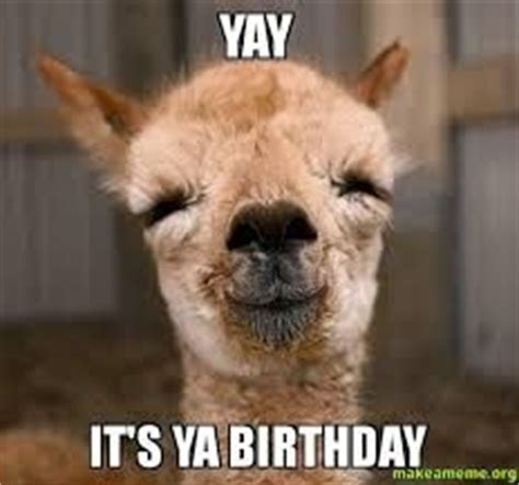 Llama Birthday Meme - birthday funnies birthdays and llamas on pinterest