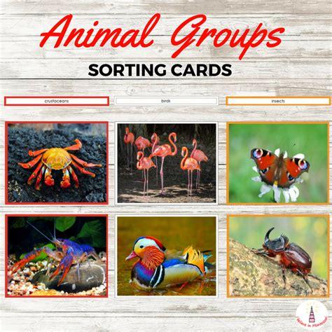 printable animal sorting cards printable back to school preschool mega bundle fun with mama