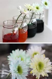 color changing flowers color changing flower science experiment stem