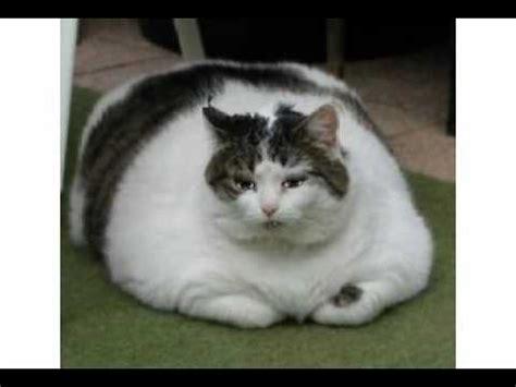 Decke Katze by Fette Katze Cat