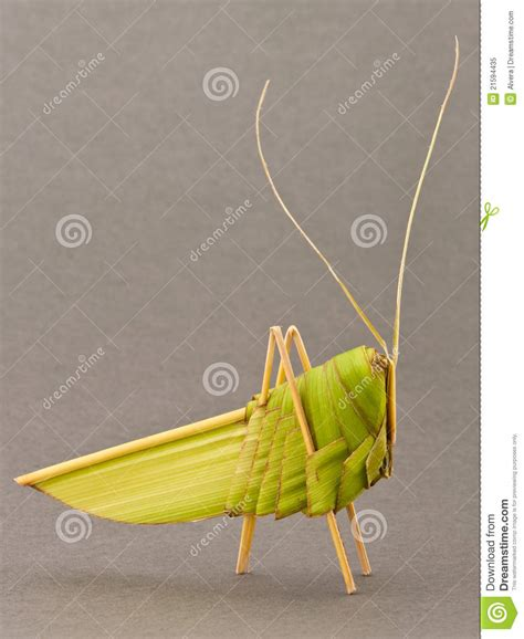 Origami Grasshopper - origami grasshopper palm tree leafs royalty free stock