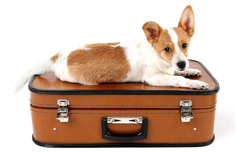 puppy suitcase on suitcase isolated on white background beinnein
