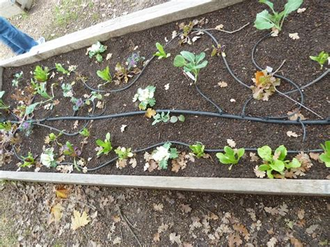 drip irrigation for raised beds raised bed with drip irrigation garden beds and