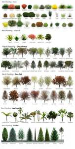 Identifying Trees By Their Flowers - revit rpc tree guide from a revit user archvision blog