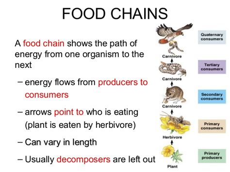 food web flowchart flow of energy 2013 2014