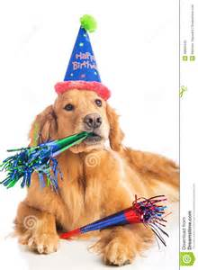 dog birthday party stock photo image 48600440