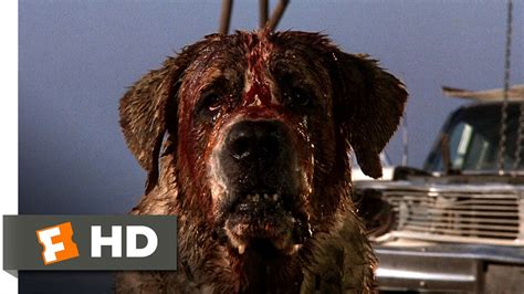 cujo the cujo 7 8 clip donna is bitten 1983 hd