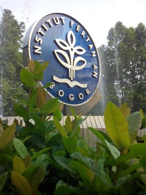 sketsa senja healing spot  institut pertanian bogor