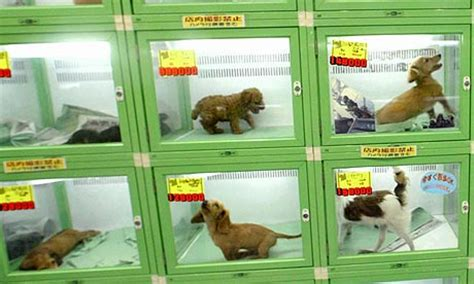 pet shop puppies japanese trucks put stray animals on the move world news the guardian