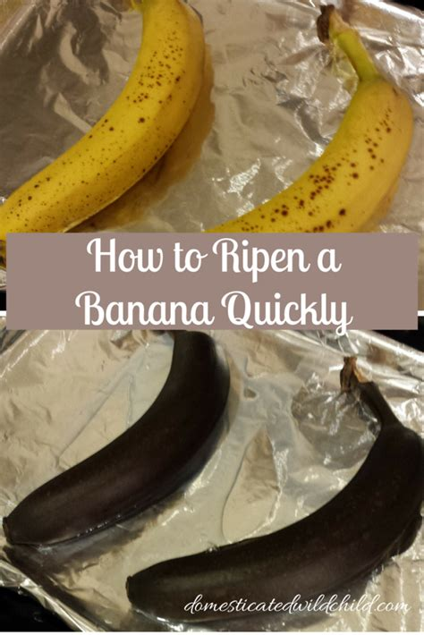 how to ripen a banana quickly domesticated wild child