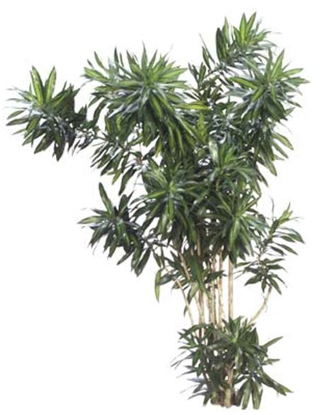 inside urban green low light low maintenance dracaena bowl low light indoor plants for houston area office lobby and