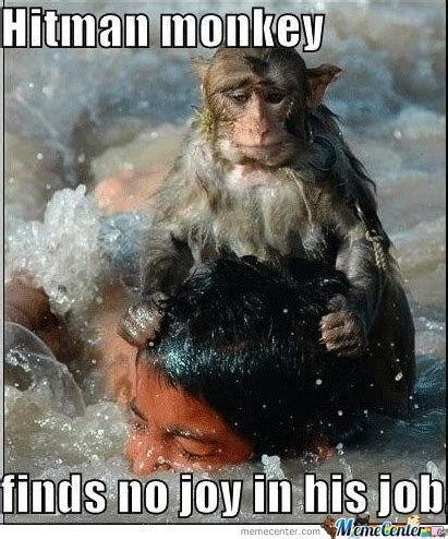 Monkey Meme - monkey memes best collection of funny monkey pictures