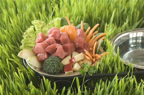 diet for dogs recipes the benefits of a diet for dogs