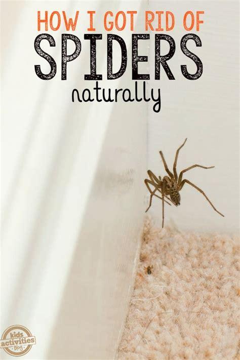 292 best images about tuin insecten en plagen garden