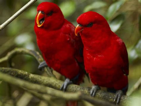picture of love bird wallpaper hd wide birds pics litle pups desktop wallpapers animals wallpapers flowers wallpapers