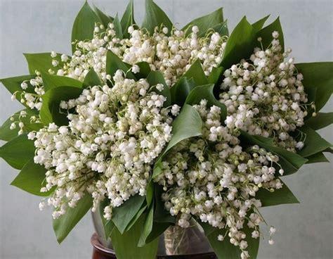 fiori di mughetto mughetto convallaria majalis bulbi mughetto