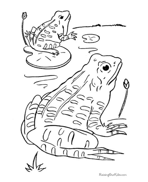 coloring page frogs frog coloring pages for kids coloring home