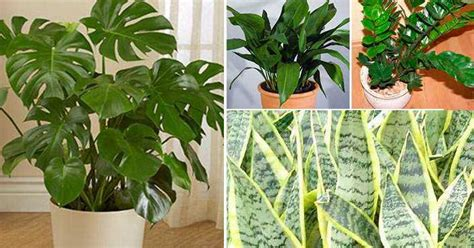 plantas de interior sin luz plantas de interior que necesitan poca luz