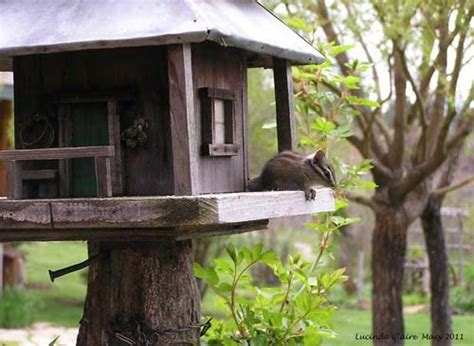 Chipmunk House Garden Pinterest