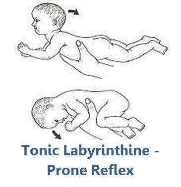tonic labyrinthine prone   ashley arbuckle   flickr