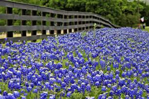 Florists In Tx A To Z The Usa State Flower