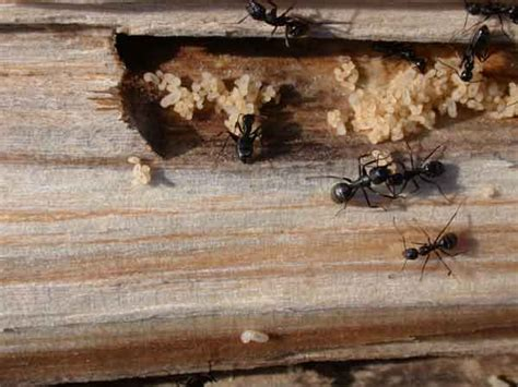 ant nest in house ant nest in house pictures to pin on pinterest pinsdaddy
