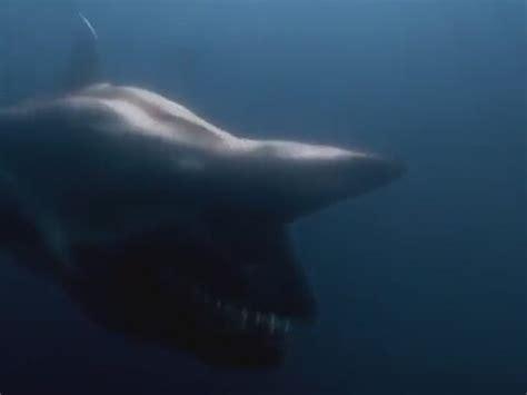 malibu shark attack malibu shark attack goblin shark attack sinemalar
