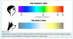 what colors do dogs see best the s color vision and what it means for our