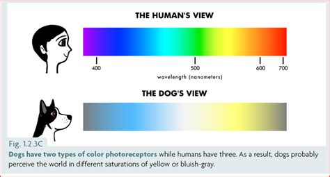 dogs color vision the s color vision and what it means for our