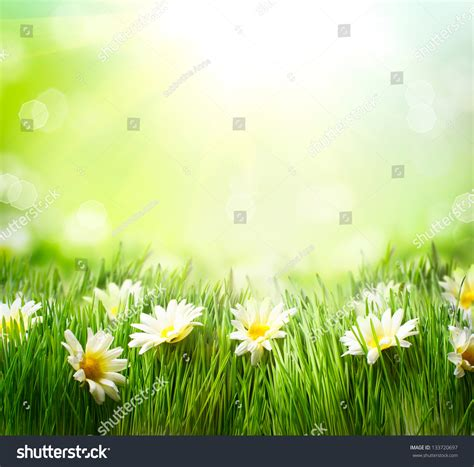 art design nature spring meadow daisies grass flowers border stock photo