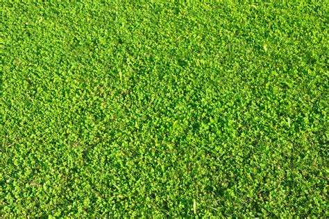 Types Of Grass by What Are The Different Types Of Lawn Grass Ehow Uk