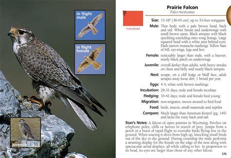 field guide california birds information birds of wyoming field guide adventurepublications net
