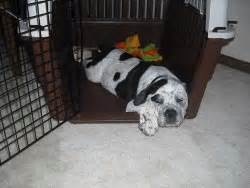 my puppy keeps pooping in his crate at crate a puppy puppy crate 101