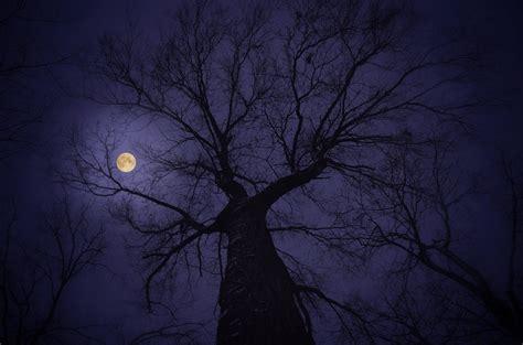 wallpaper full moon tree hd nature