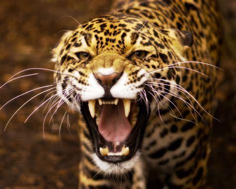 imagenes de jaguares kawaii cute cat basket wallpaper 1600x1200 12401