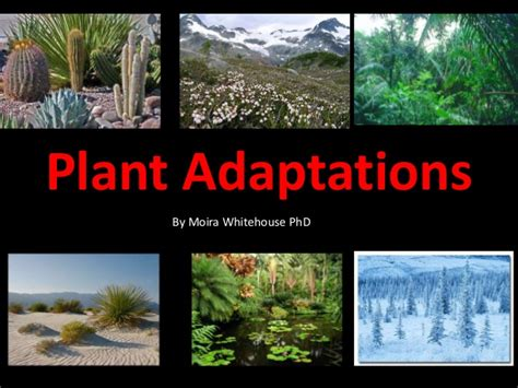 How Do Plants Adapt To The Tropical Rainforest - plant adaptations teach