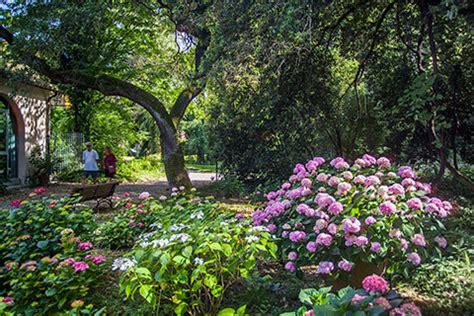 cespugli fioriti perenni arbusti ornamentali cespugli colorati