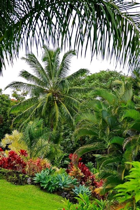 Palm Trees For Backyard by 25 Unique Tropical Landscaping Ideas On