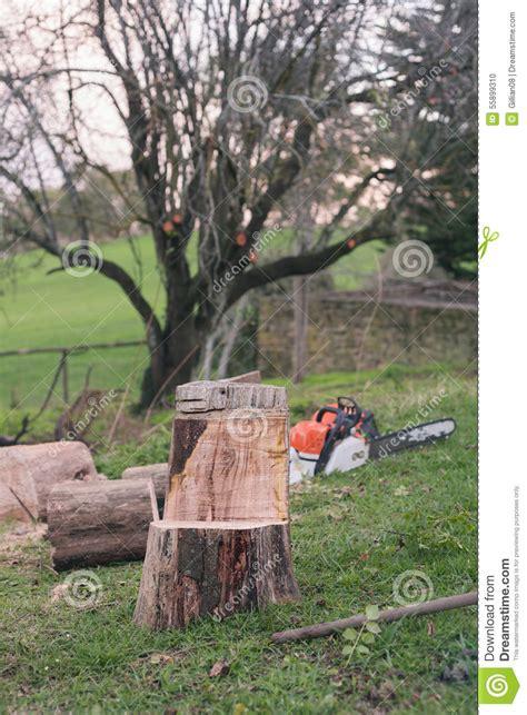 chaise faite avec une 231 onneuse 224 partir d un tronc d