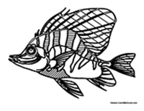 zebra fish coloring page fish coloring pages