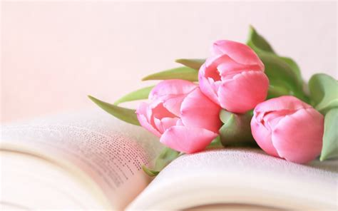 flower picture book flower tulips book hd wallpaper