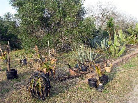 Botanical Garden Corpus Christi Corpus Christi Botanical Gardens Corpus Christi Botanical Gardens Corpus Christi Trail