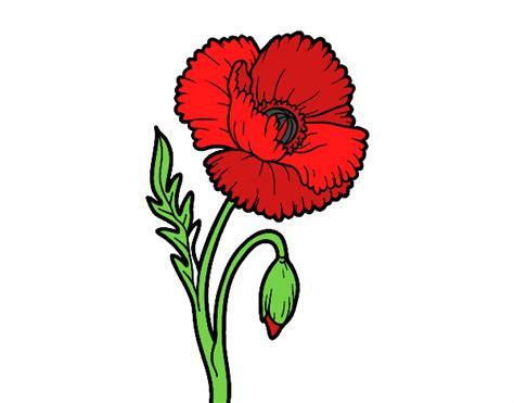 papavero fiore disegno un fiore di papavero colorato da utente non