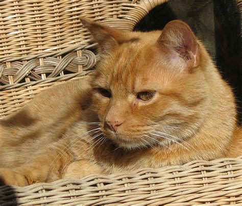 what are good orange cat names pethelpful